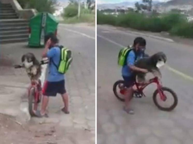 Boy helps pet dog put on mask for safety against coronavirus - viral video!