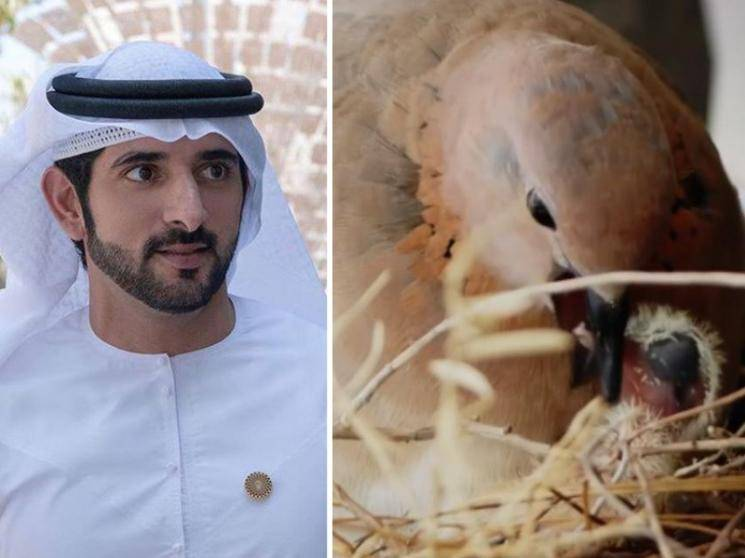 Dubai Crown Prince stops using car after finding birds nest on it!