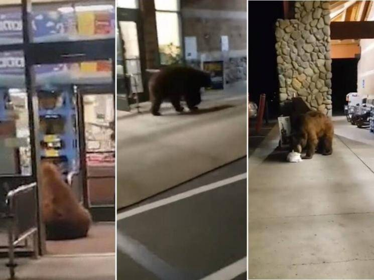 SURPRISE VISITOR: Bear enters California grocery store and gets a bag of chips | VIRAL VIDEO
