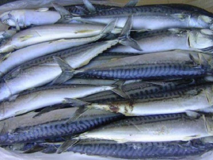 Frozen Fish packages from India test positive for COVID-19 in China!